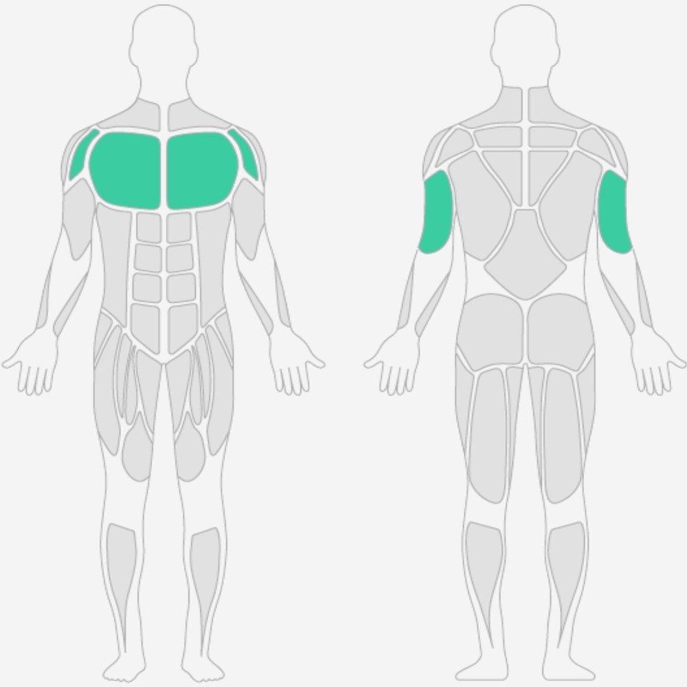 Brustmuskulatur.jpg