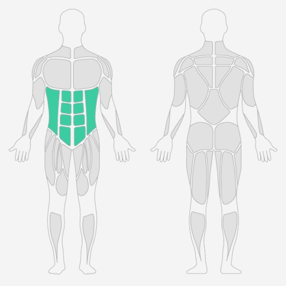Bauchmuskulatur.jpg