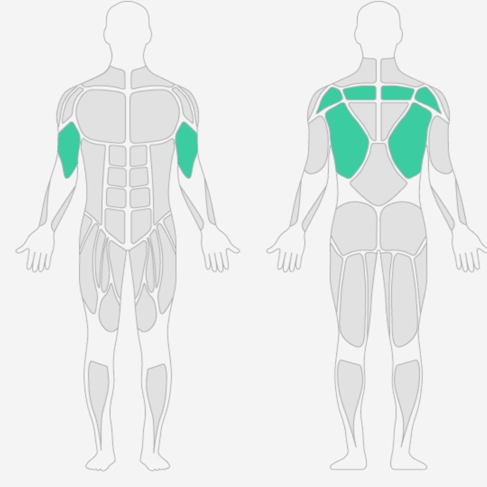 Rückenmuskulatur.jpg