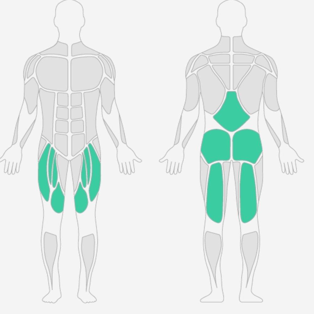Oberschenkelmuskeln.jpg