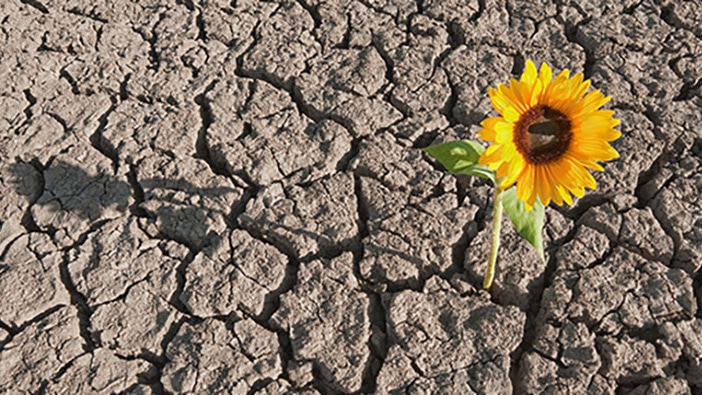 news-ashridge-resilience-702x395.jpg