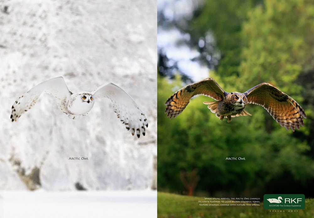 arctic_owl_eng.jpg