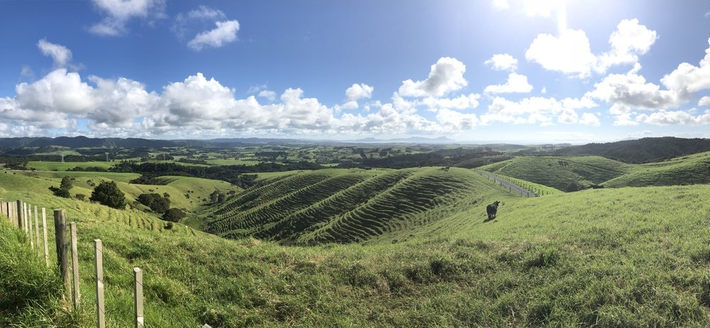 Pastureland in the North Island of New Zealand, or stock Windows XP wallpaper?