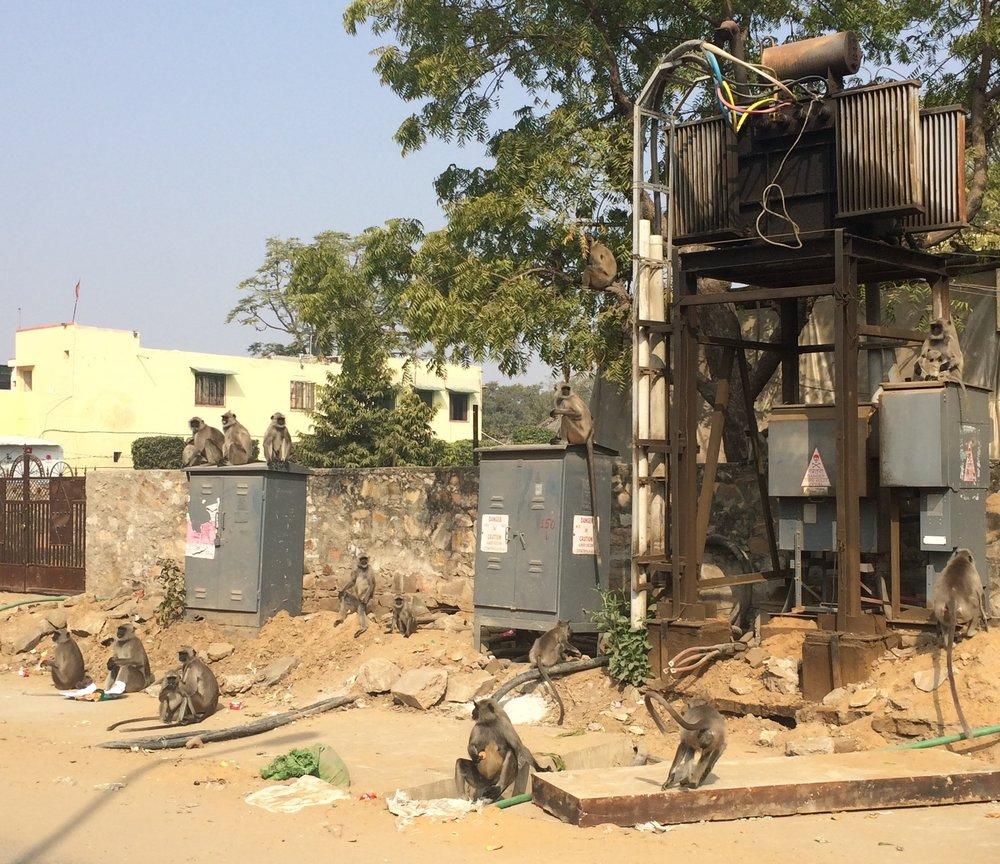 A barrel of monkeys posing on a transformer in Jaipur.