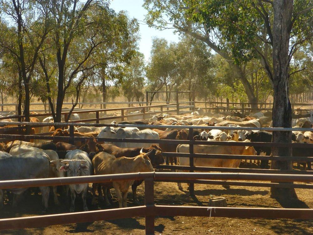 outback2.jpg