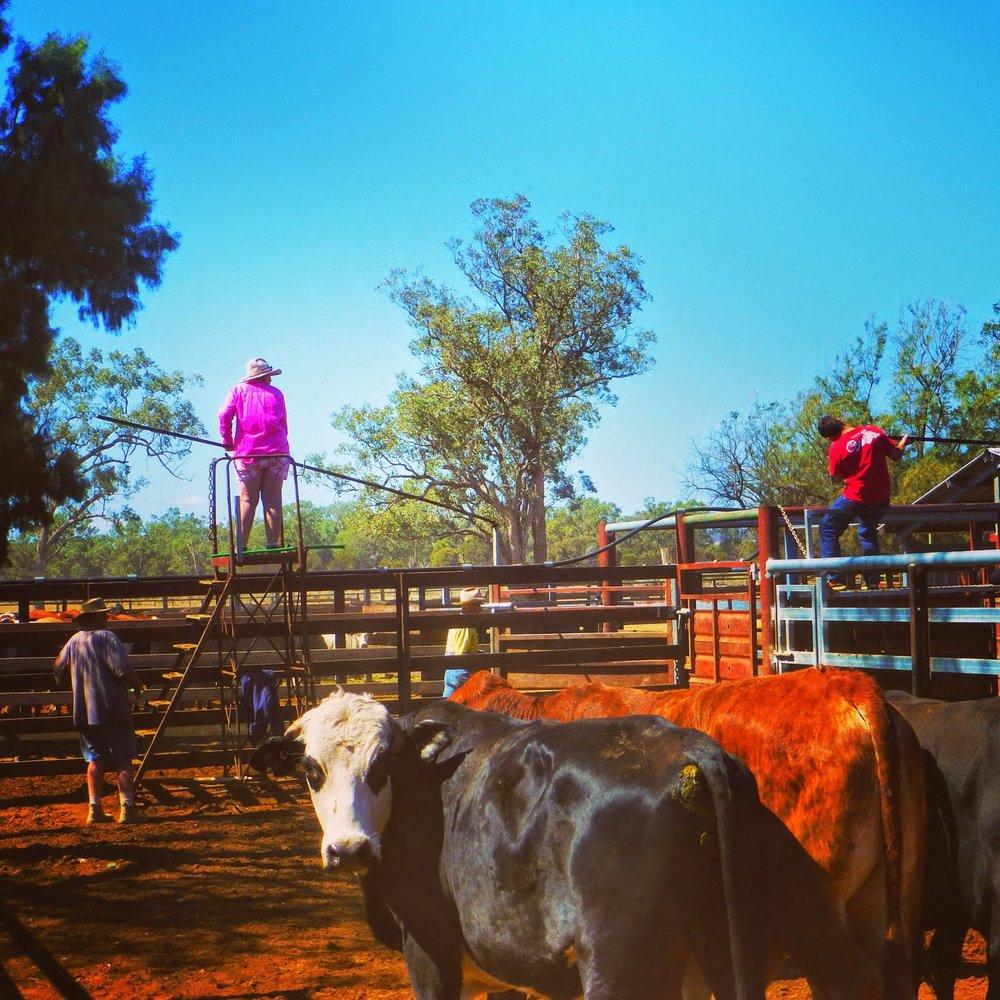 outback10.jpg