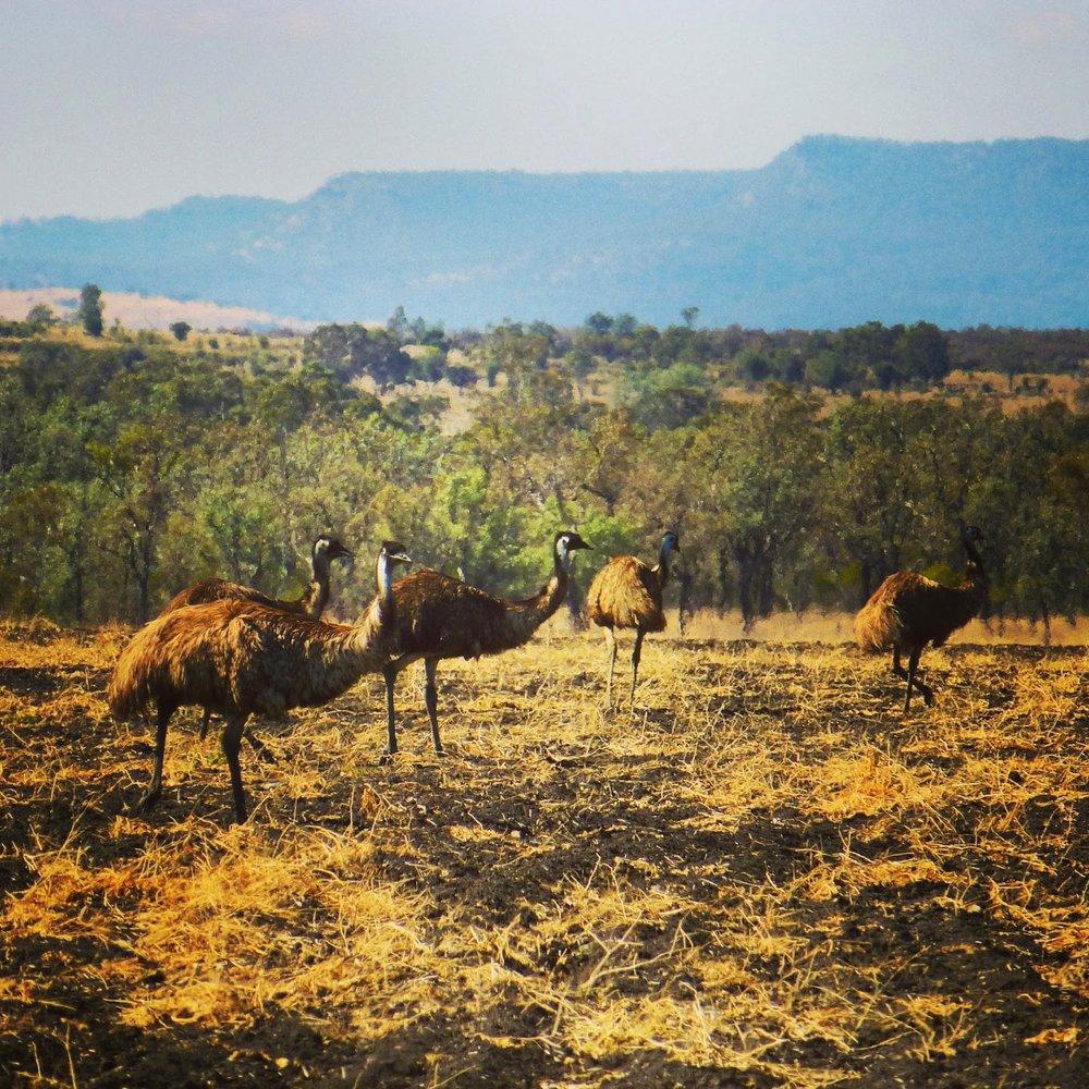 outback17.jpg