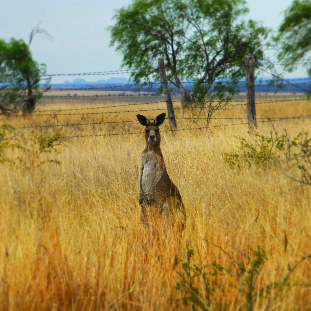 outback19.jpg