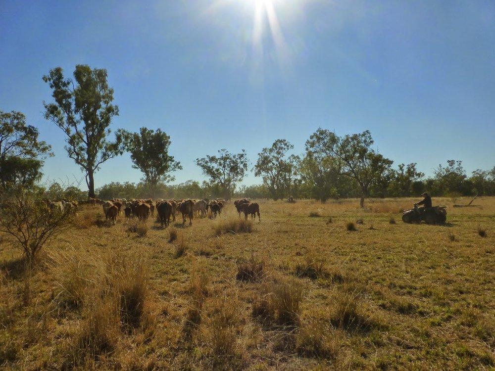 outback20.jpg
