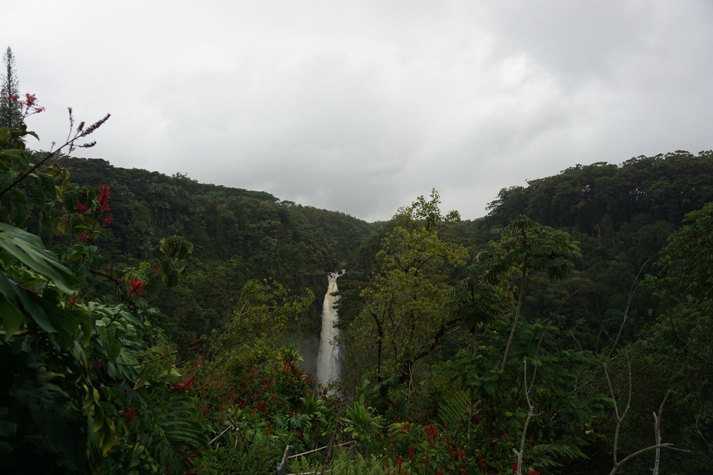 next up was 'akaka falls, the 422 ft waterfall north of hilo town.   we arrived at dusk and the lush rainforest filled with wild orchids, bamboo groves and draping fern set the backdrop to the most amazing view of this waterfall.