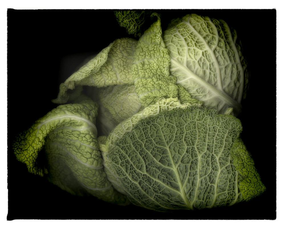 cabbage-textured_on black background_philomena_carroll.jpg