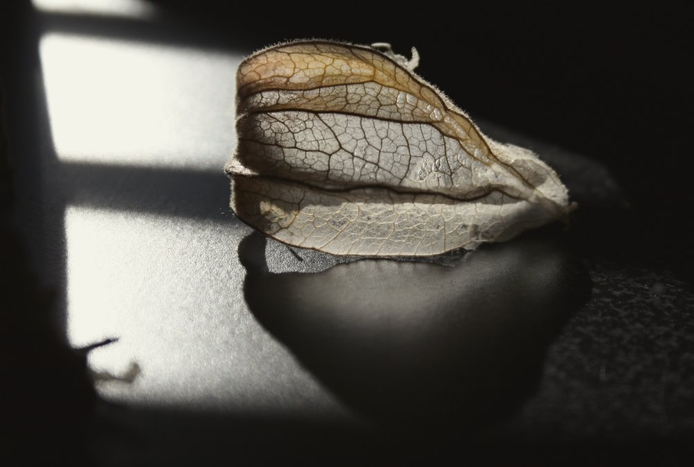 gooseberry_leaf3_smallworks_philomena_carroll.jpg