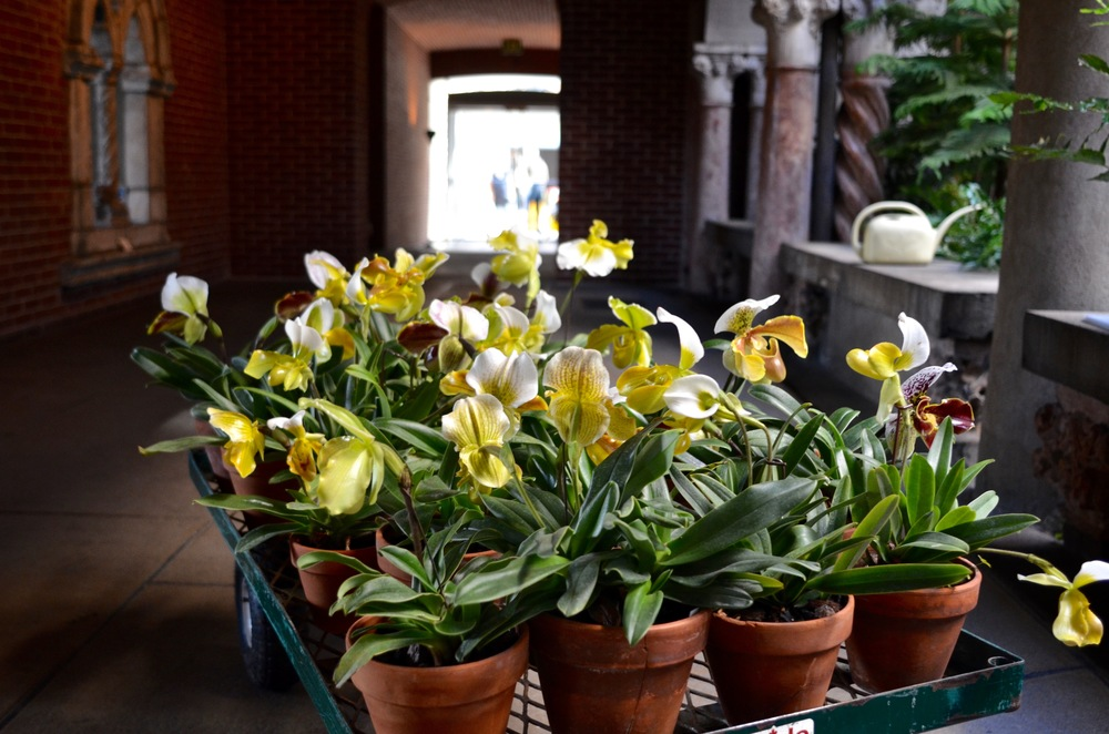 Yellow orchids, awaiting their new — temporary — homes.