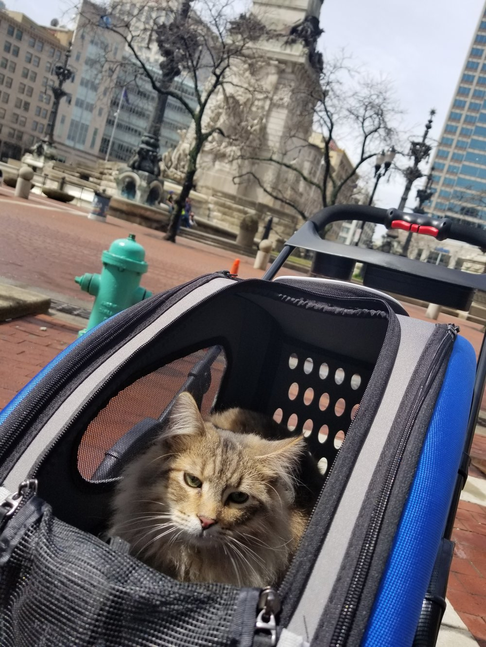 Gunner Bobtail Kitty in his stroller downtown Indianapolis