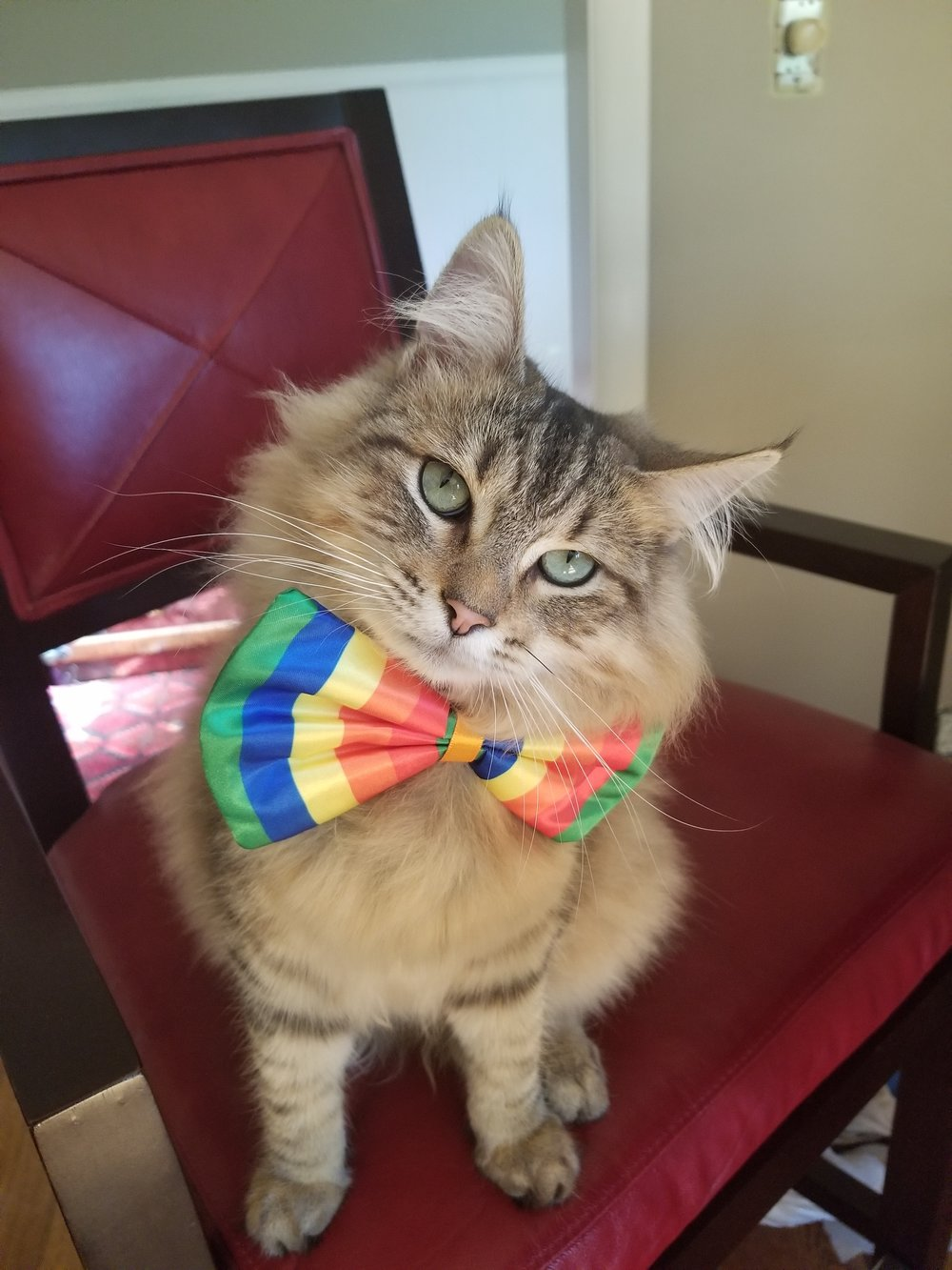 Gunner Bobtail Kitty celebrating Pride Month