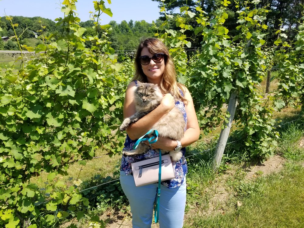Gunner Bobtail Kitty at Bowers Harbor Winery