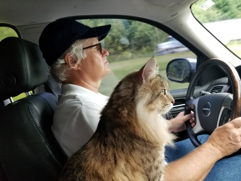 Gunner Bobtail Kitty trucking across the county