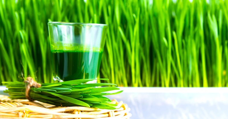 wheatgrass-juice-shot.jpg