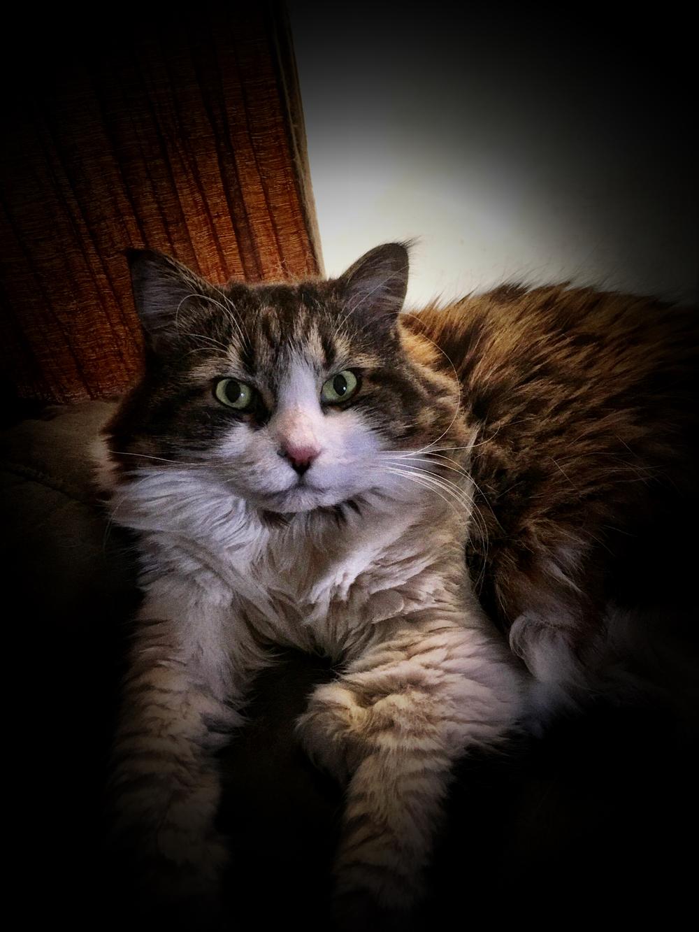 Matilda:  aka Tilly, Fluffy