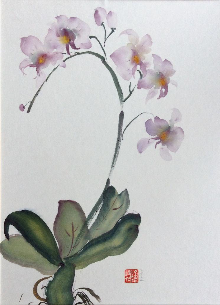 Zammit orchid time.jpg