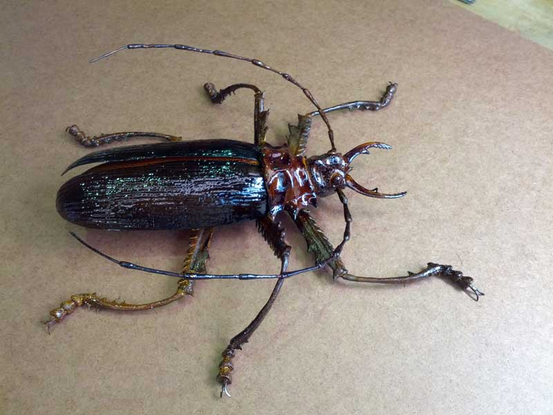 Plastic Cockroach (50cm) for a medical expo booth