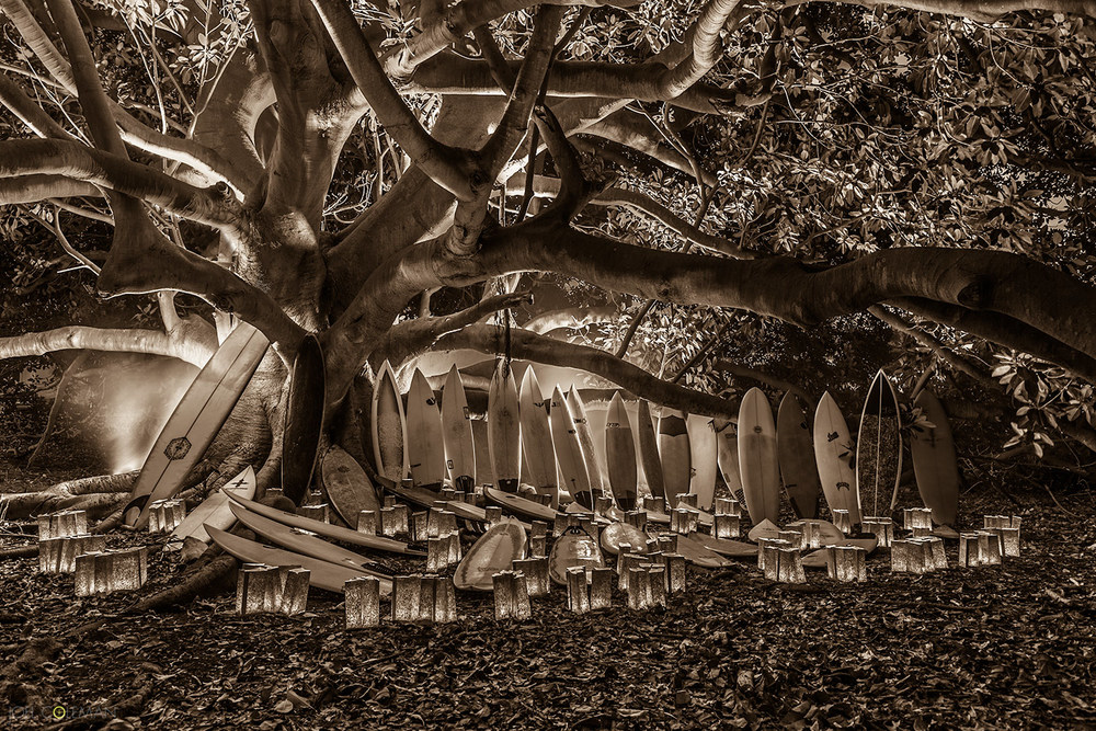 The Quiver Tree