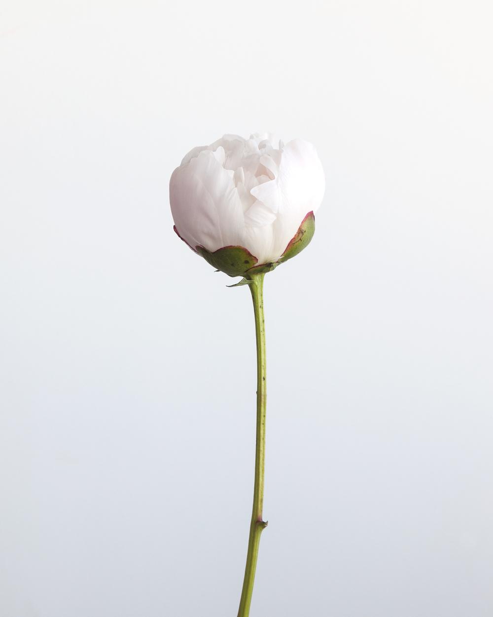 FLOWERS0056.jpg