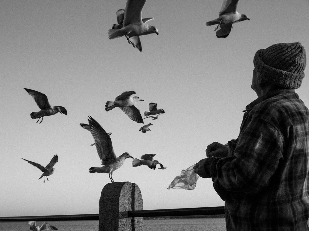 bird-feeding-2694.jpg