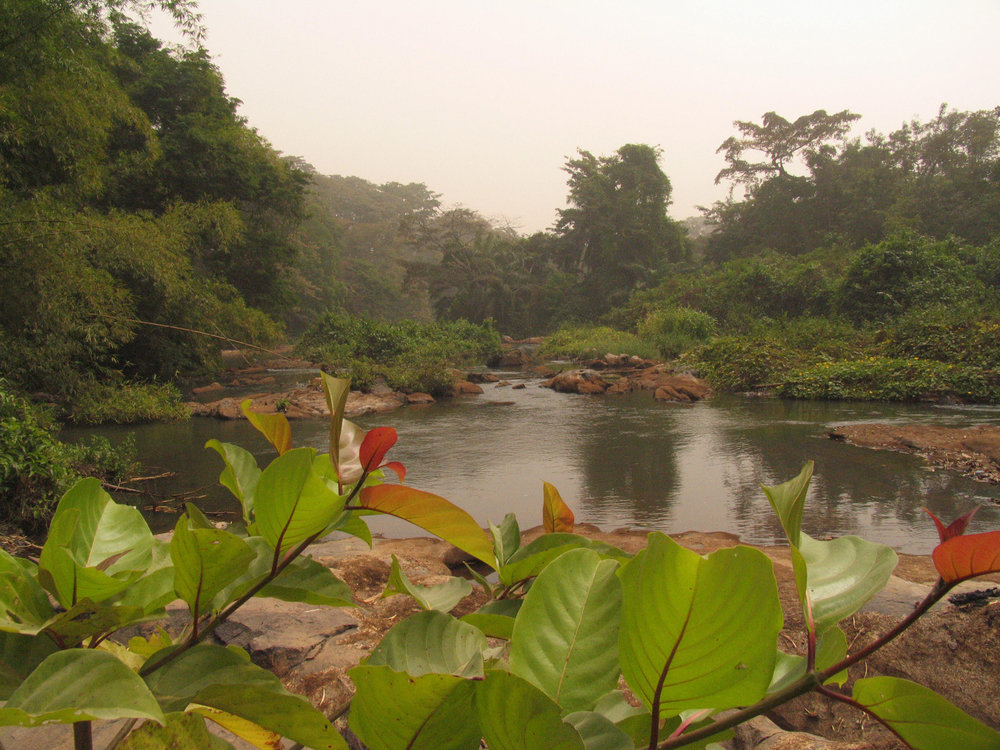 The Ọ̀ṣun river idyll at the Sacred Grove of Òṣogbo, today UNESCO world heritage site. ©Wolfgang Denk