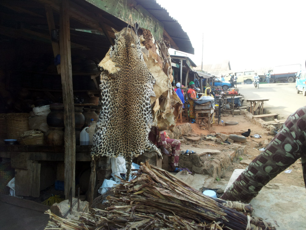 "Àmọ̀tẹ́kùn on the market in Yorùbáland, very likely imported from Cameroon, and sometimes sold as 'tiger skin' in Orisha groups on Social Media. Check our  free Yorùbá language course  to learn Yorùbá sentences like ""I don't buy leopard fur, it is a protected animal!"" ©Orisha Image"