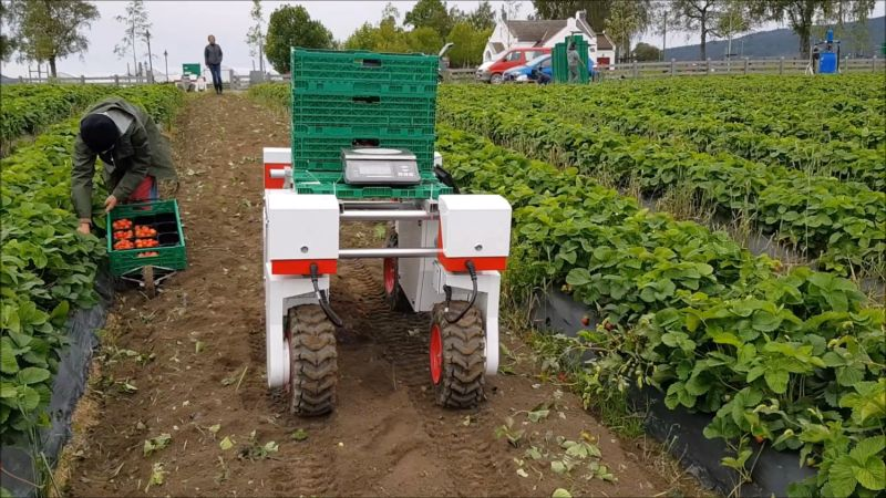Robots To Help With Field Logistics In The Uk Strawberry Innovation