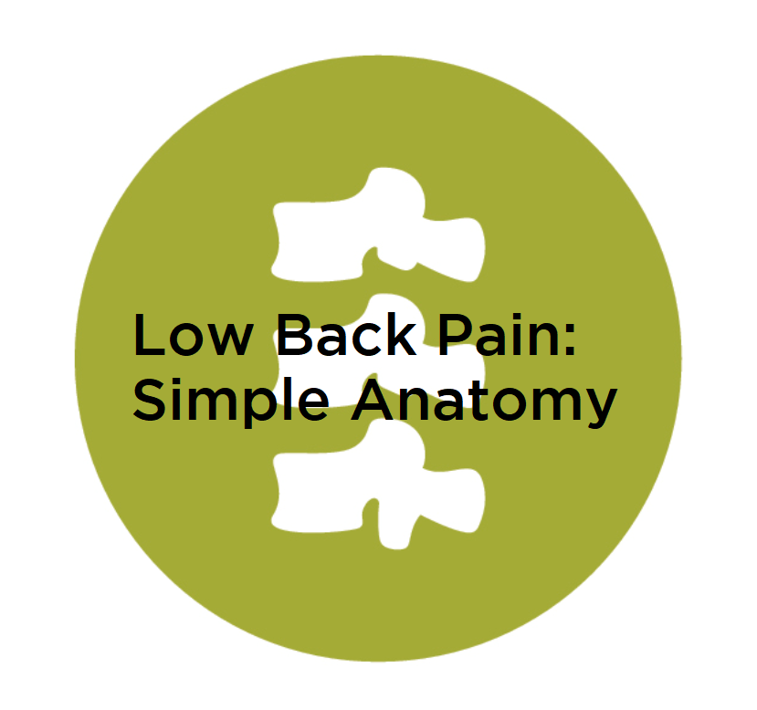 Low Back Pain: Simple Anatomy — Good Move Physio