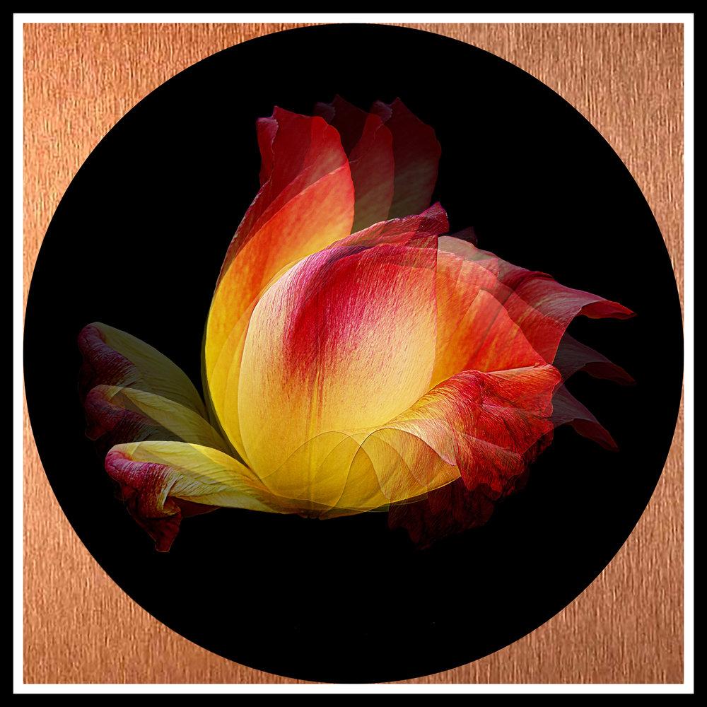 rosegold.jpg