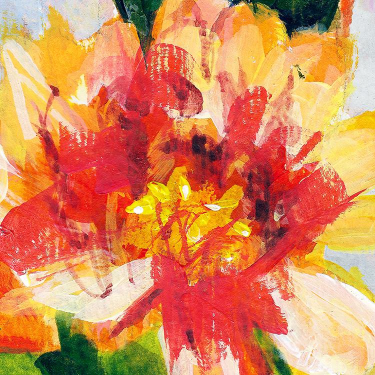 orangeflower-72dpi-750px.jpg
