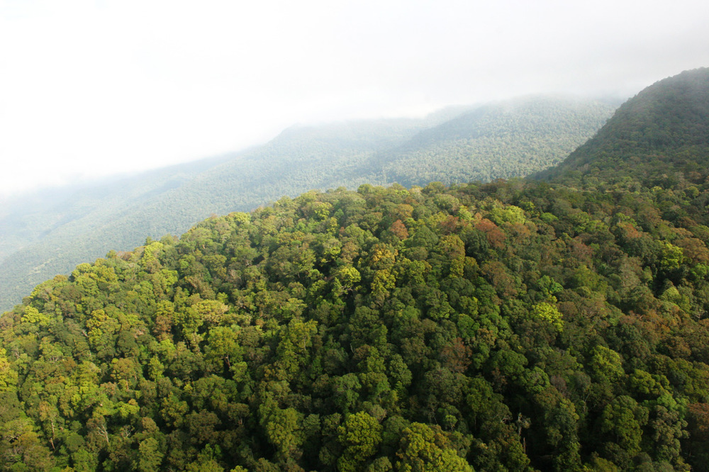 CARDAMOM MOUNTAINS, CAMBODIA