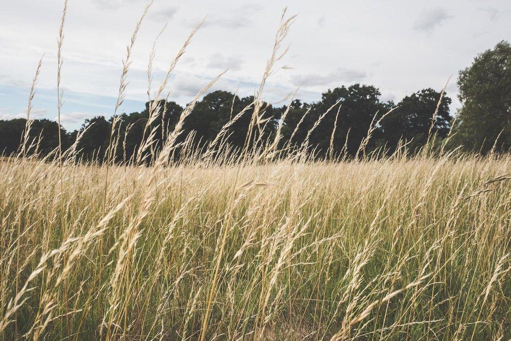 Louisa Stefan Richmond Park Engagement Shoot003.jpg