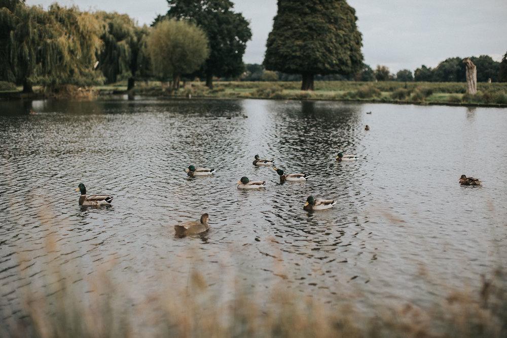 Bushy Park Engagement Shoot002.jpg