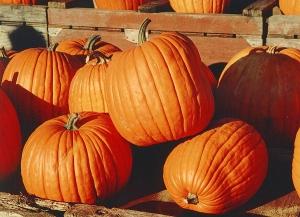 Pumpkins-300x217.jpg