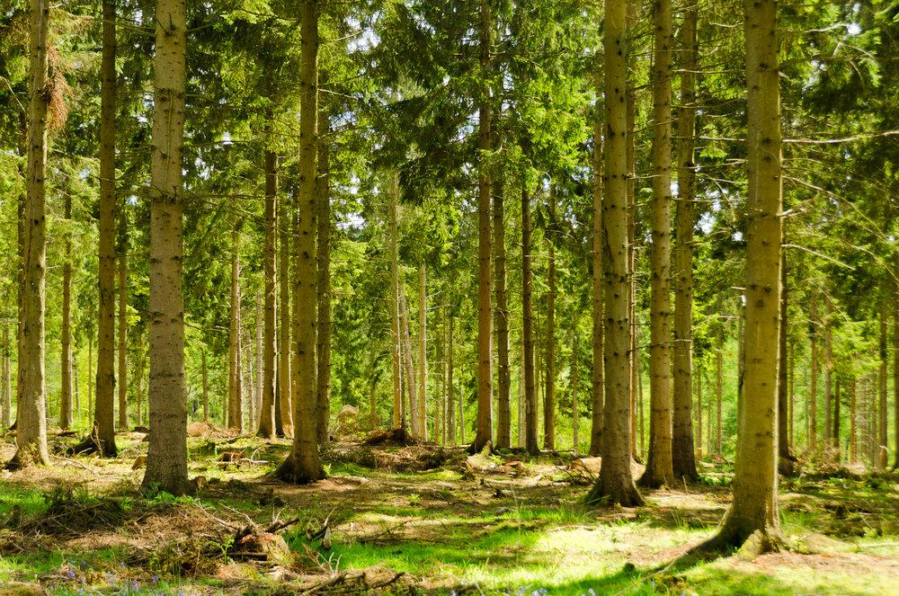 England_-_English_Summer_Forest_(7183018142).jpg
