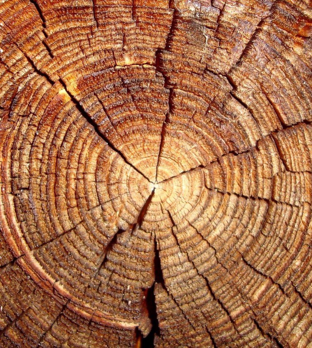 tree-rings-3.jpg