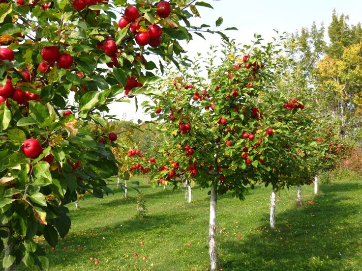 Image result for Buy Your Fruit Trees Online