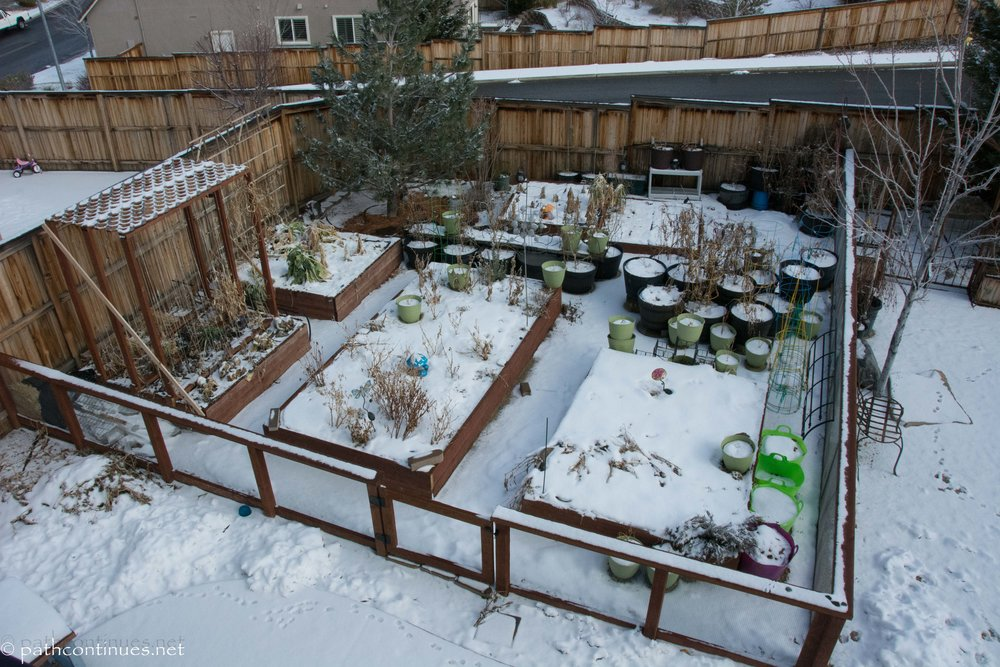 "This beautiful set-up is an example of what you can do with a large area. Notice the fence to keep their prying ""tomato loving"" labs out. Everything is on drip for easy watering, and plants are grouped together for companion planting to avoid pests. This beautiful garden was designed and built by local gardeners, Oli and Kevin. They preserve all their bounty through canning and we will showcase more of their garden as the season progresses."