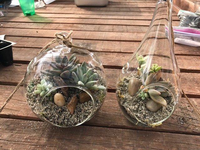 Totally Tricked out Terrariums - Saturday, March 23rd 2pmAlways a great time, this Make & Take workshop includes plants, glass container, rocks, moss, instruction and all materials needed.3 sizes available, choose yours below.