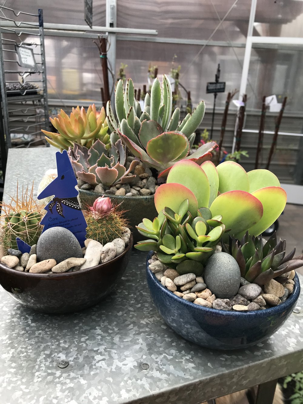 Terrarium Time - You pick your glass, or container, and plants A-La-Cart, then we provide all the instruction, rock, moss and planting materials required. This class is led by Melissa and is always a fun time.