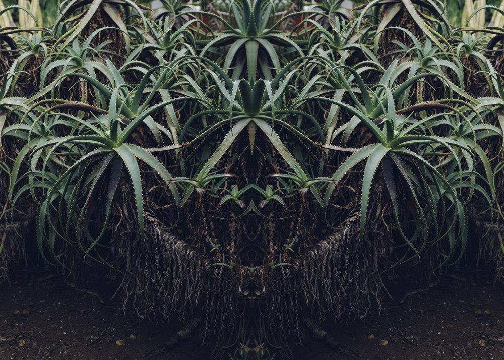 kaktus_2.jpg