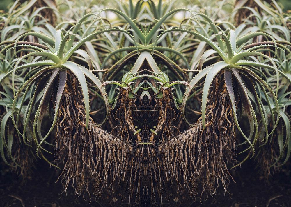 kaktus_3.jpg