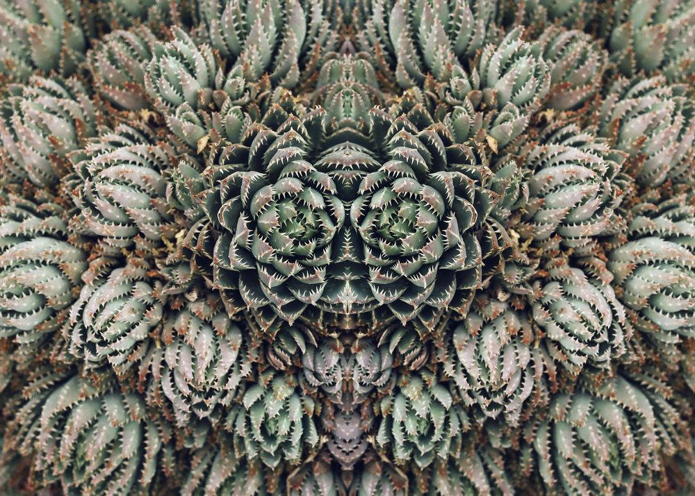 kaktus_7.jpg