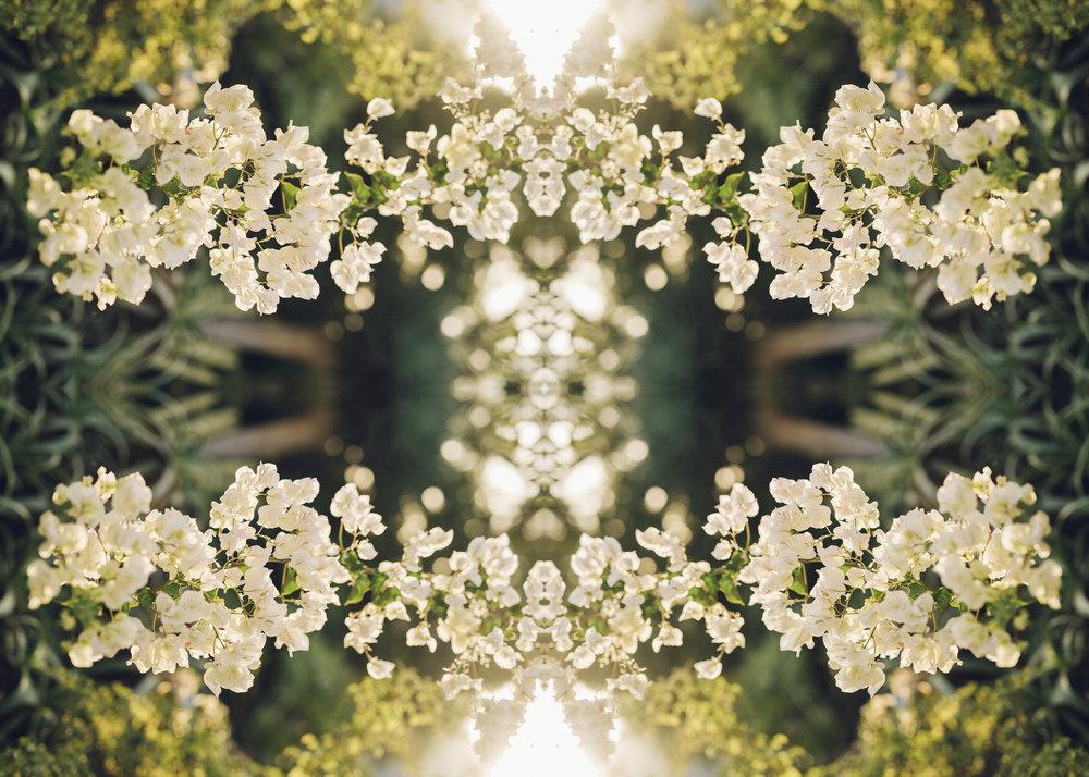 kaktus_13.jpg