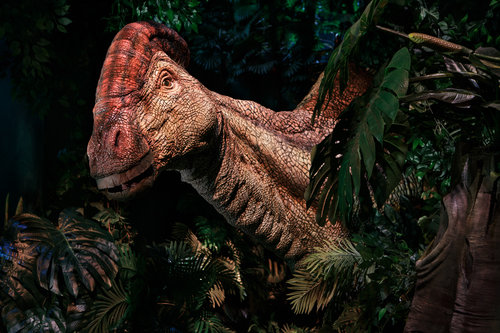 JTP-Parasaurolophus.jpg