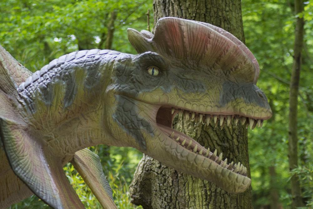 Dilophosaurus 5.jpg